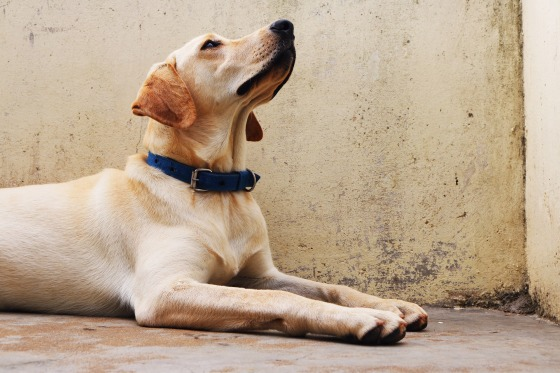 dog-2544292_1920