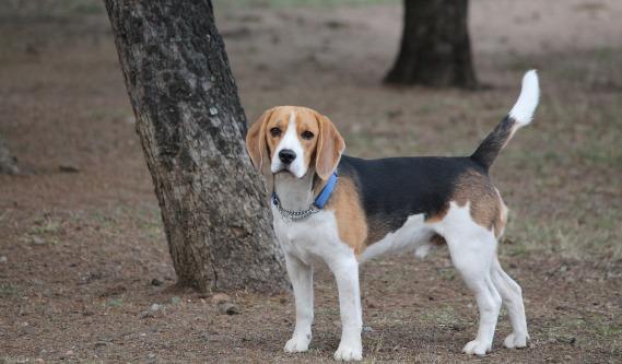 dog-2845798_1920
